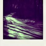 darkwoods