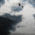 sky geese