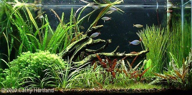 Rainbowfish 40 gal