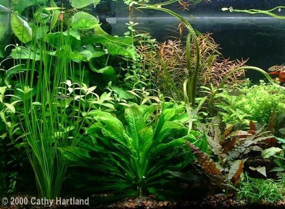 30 gallon community aquarium - left