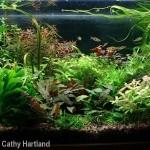 30 gallon aquarium - center