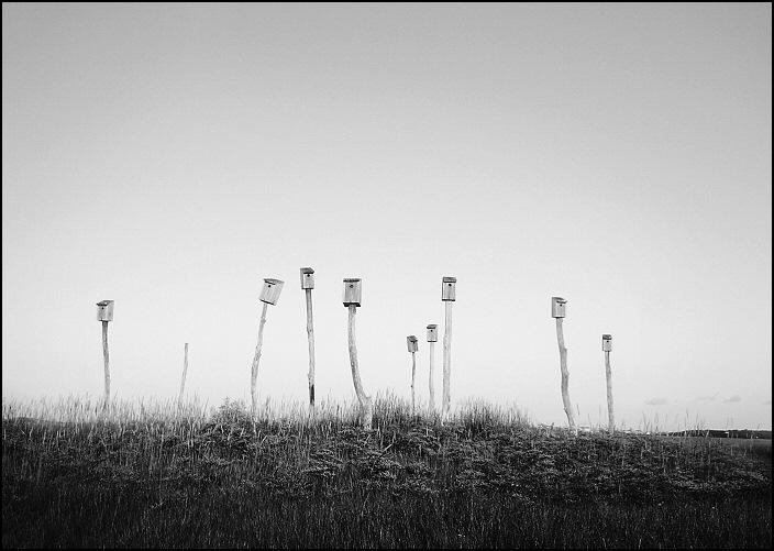 birdhouses2as